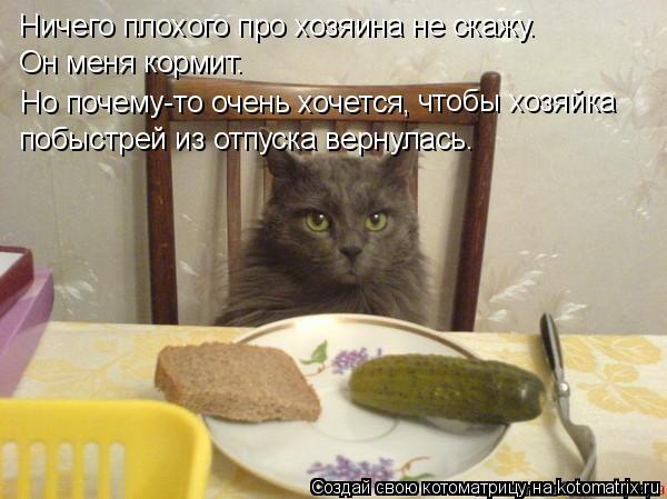 Котоматрица: Ничего плохого про хозяина не скажу. Он меня кормит. Но почему-то очень хочется, чтобы хозяйка  побыстрей из отпуска вернулась.