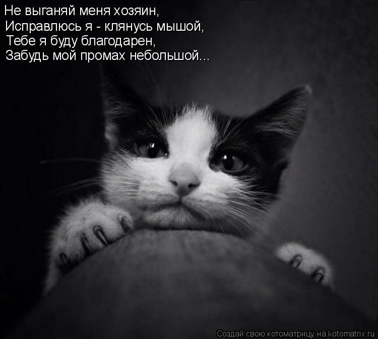 Котоматрица: Не выганяй меня хозяин, Исправлюсь я - клянусь мышой, Тебе я буду благодарен, Забудь мой промах небольшой...