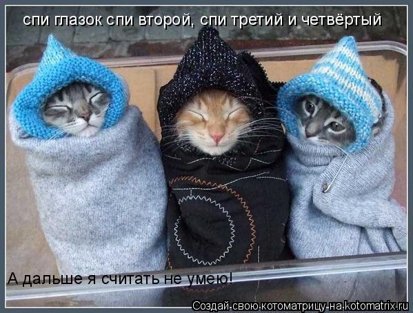 Котоматрица: спи глазок спи второй, спи третий и четвёртый А дальше я считать не умею!