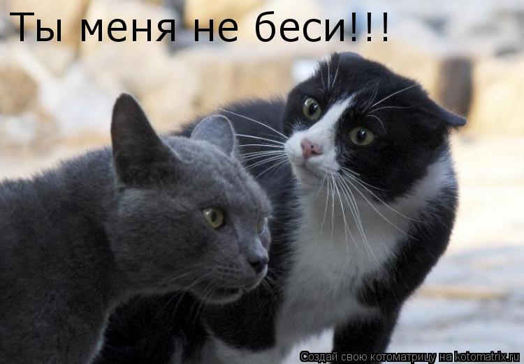 Котоматрица: Ты меня не беси!!!