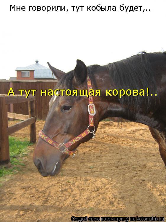 Котоматрица: Мне говорили, тут кобыла будет,.. А тут настоящая корова!..