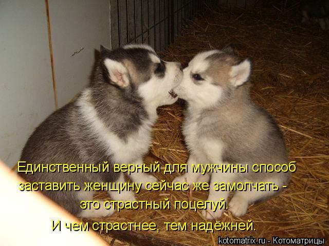 Котоматрица: Единственный верный для мужчины способ заставить женщину сейчас же замолчать - это страстный поцелуй. И чем страстнее, тем надёжней.