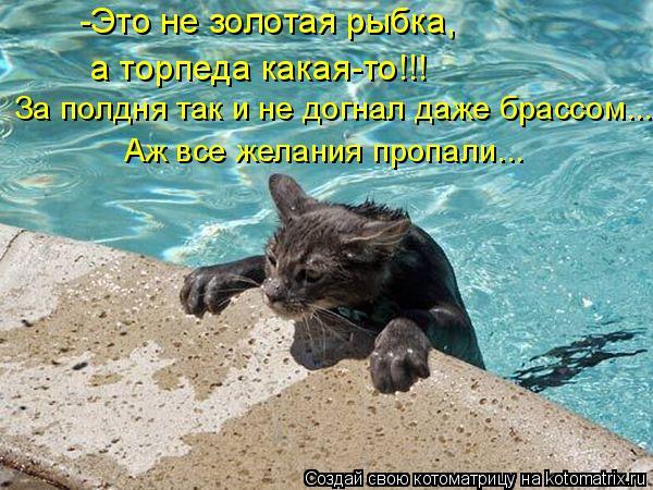 Котоматрица: -Это не золотая рыбка,  а торпеда какая-то!!! За полдня так и не догнал даже брассом... Аж все желания пропали...