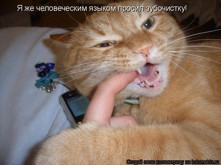Котоматрица: Я же человеческим языком просил зубочистку!