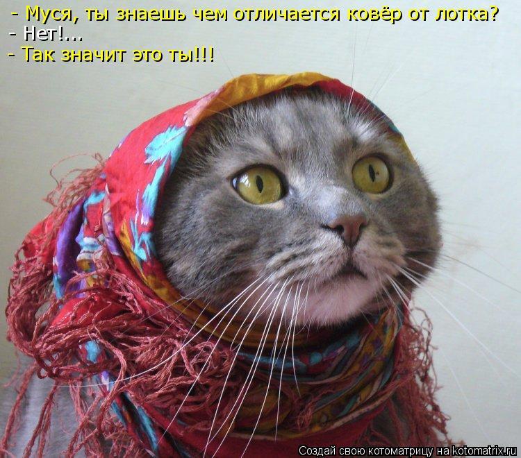 Котоматрица: - Муся, ты знаешь чем отличается ковёр от лотка? - Нет!... - Так значит это ты!!!