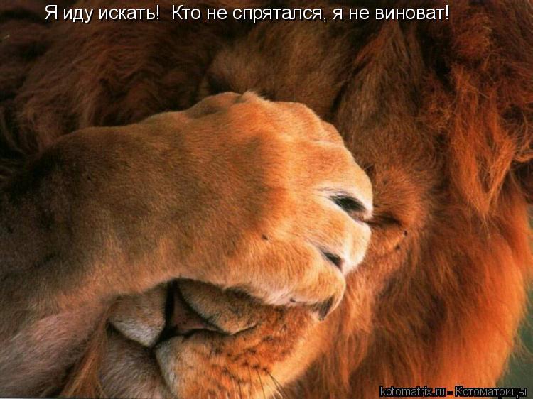 Котоматрица: Я иду искать!  Кто не спрятался, я не виноват!