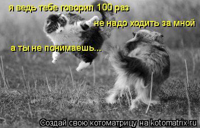 Котоматрица: я ведь тебе говорил 100 раз не надо ходить за мной а ты не понимаешь...