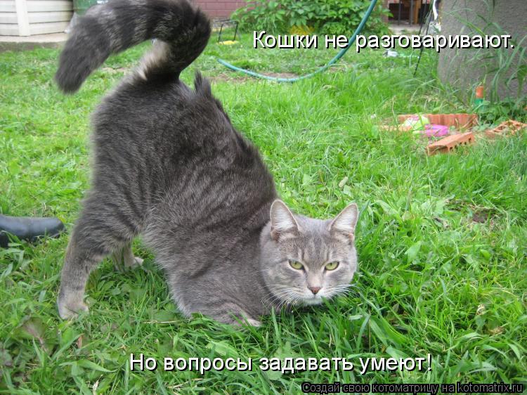 Котоматрица: Кошки не разговаривают. Но вопросы задавать умеют!