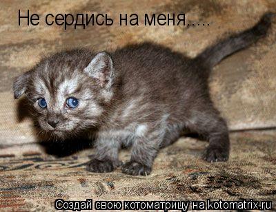 Котоматрица: Не сердись на меня.....