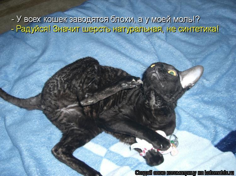 Котоматрица: - У всех кошек заводятся блохи, а у моей моль!? - Радуйся! Значит шерсть натуральная, не синтетика!