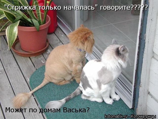 """Котоматрица: Может по домам Васька? """"Стрижка только началась"""" говорите?????"""