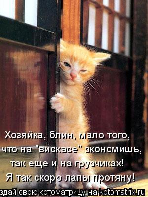 """Котоматрица: Хозяйка, блин, мало того, что на """"вискасе"""" экономишь, так еще и на грузчиках! Я так скоро лапы протяну!"""