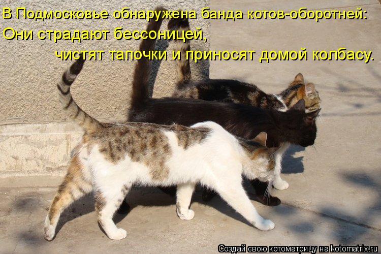 Котоматрица: В Подмосковье обнаружена банда котов-оборотней: Они страдают бессоницей, чистят тапочки и приносят домой колбасу.