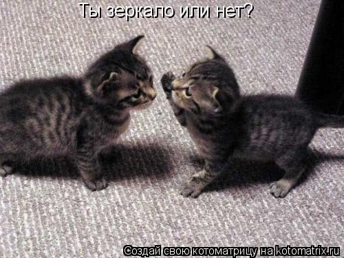 Котоматрица: Ты зеркало или нет?