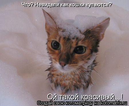 Котоматрица: Ой такой красивый...! Что? Невидели как кошки купаются?