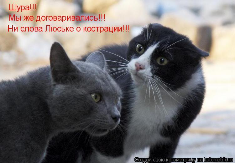 Котоматрица: Шура!!! Ни слова Люське о кострации!!! Мы же договаривались!!!