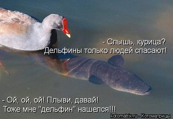 """Котоматрица: Дельфины только людей спасают! - Слышь, курица?  Тоже мне """"дельфин"""" нашелся!!! - Ой, ой, ой! Плыви, давай!"""