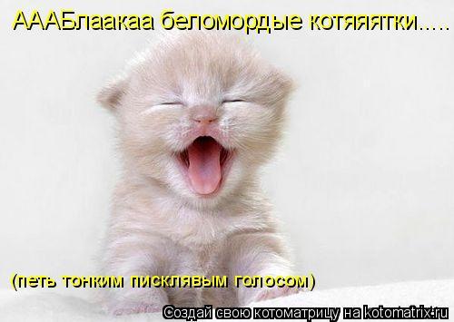 Котоматрица: АААБлаакаа беломордые котяяятки..... (петь тонким писклявым голосом)