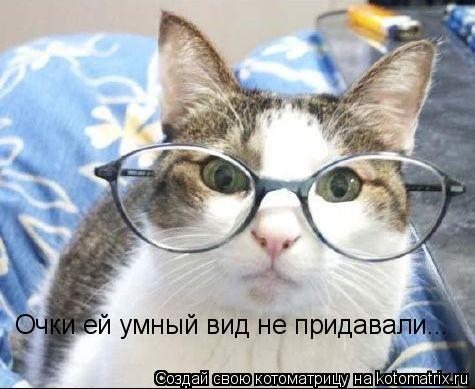 Котоматрица: Очки ей умный вид не придавали...