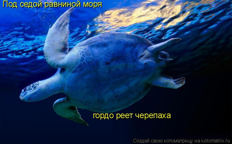 Котоматрица: Под седой равниной моря гордо реет черепаха