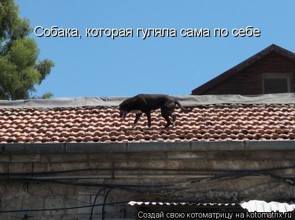 Котоматрица: Собака, которая гуляла сама по себе