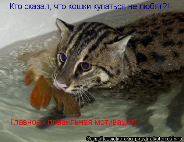 Котоматрица: Кто сказал, что кошки купаться не любят?! Главное - правильная мотивация!