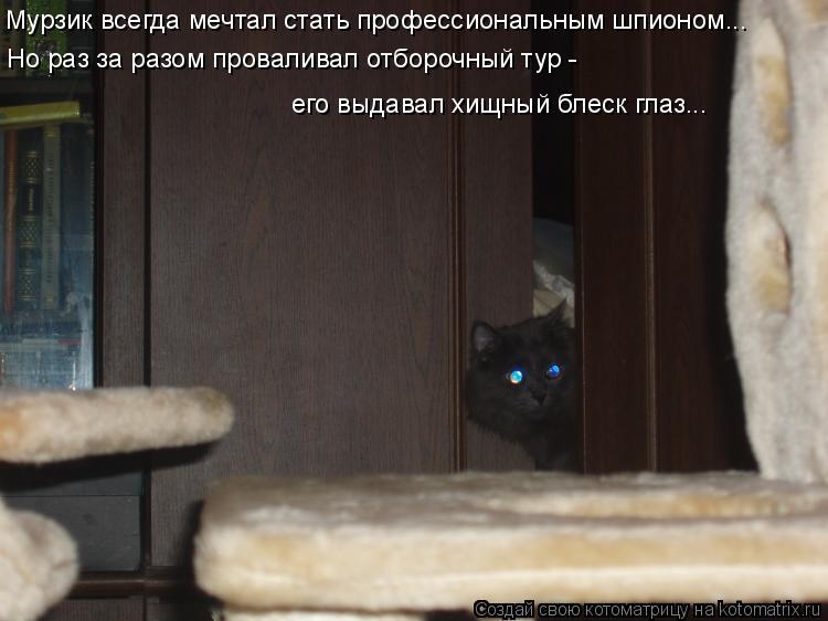 Котоматрица: Мурзик всегда мечтал стать профессиональным шпионом... Но раз за разом проваливал отборочный тур -  его выдавал хищный блеск глаз...