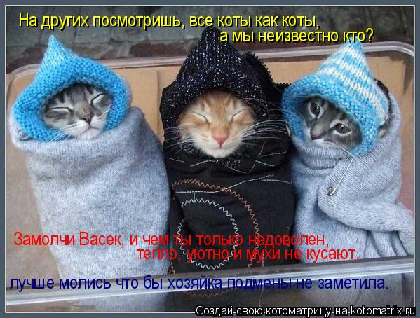 Котоматрица: На других посмотришь, все коты как коты, а мы неизвестно кто? Замолчи Васек, и чем ты только недоволен,  тепло, уютно и мухи не кусают,  лучше м