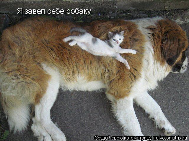 Котоматрица: Я завел себе собаку.