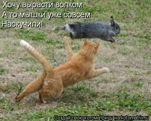 Котоматрица: Хочу вырасти волком А то мышки уже совсем Наскучили!