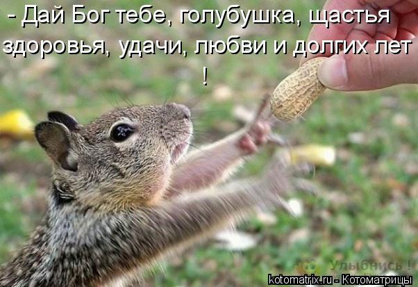 Котоматрица: - Дай Бог тебе, голубушка, щастья  здоровья, удачи, любви и долгих лет !