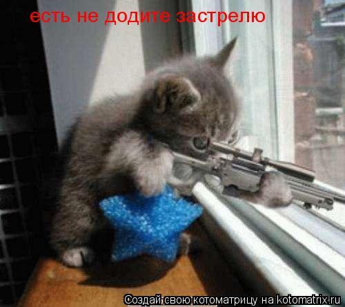Котоматрица: есть не додите застрелю