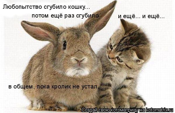 Котоматрица: Любопытство сгубило кошку... потом ещё раз сгубило и ещё... и ещё... в общем, пока кролик не устал...