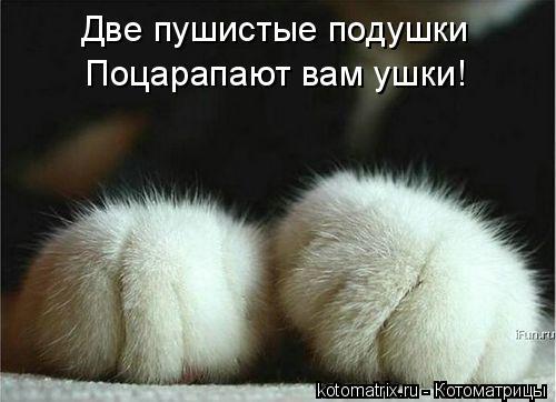 Котоматрица: Две пушистые подушки Поцарапают вам ушки!