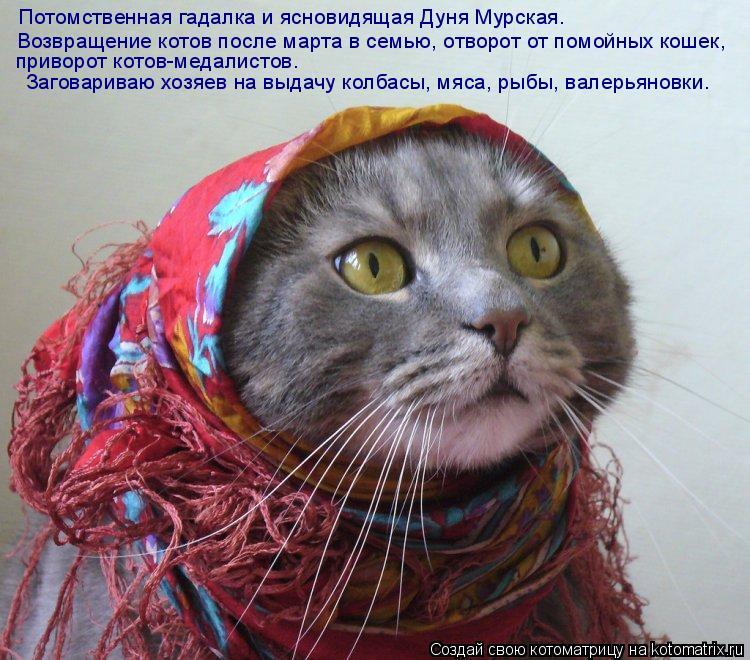 Котоматрица: Потомственная гадалка и ясновидящая Дуня Мурская. Возвращение котов после марта в семью, отворот от помойных кошек, приворот котов-медалис