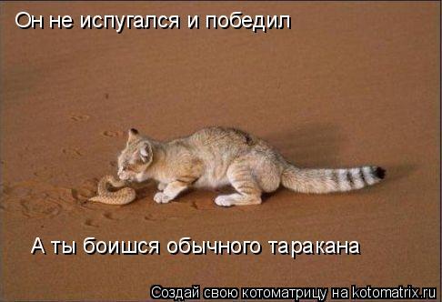 Котоматрица: Он не испугался и победил А ты боишся обычного таракана