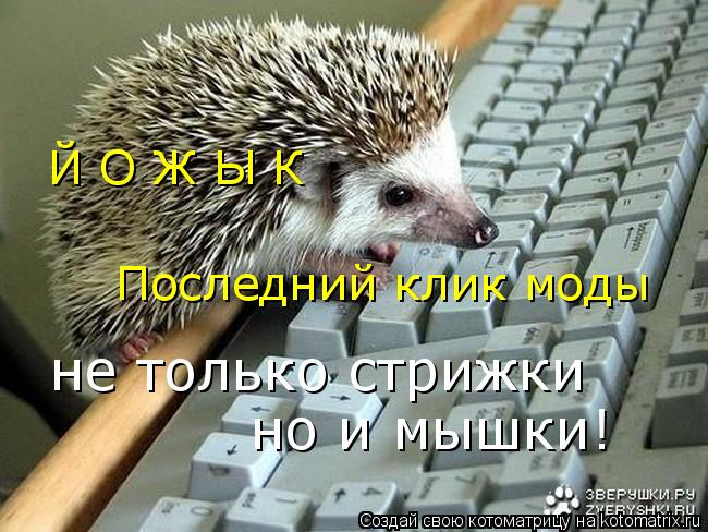 Котоматрица: Последний клик моды Й О Ж Ы К не только стрижки но и мышки!