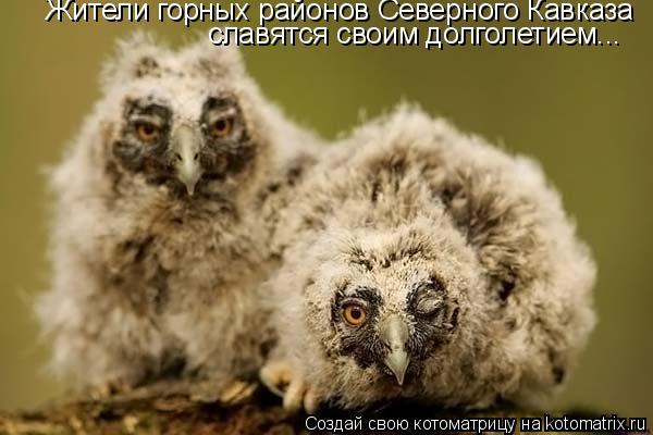 Котоматрица: Жители горных районов Северного Кавказа славятся своим долголетием...
