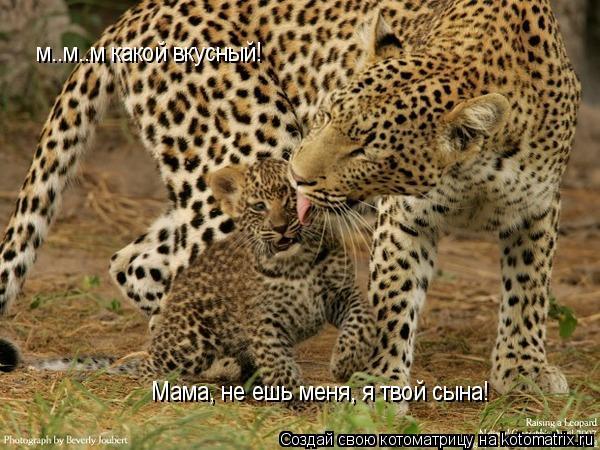 Котоматрица: м..м..м какой вкусный! Мама, не ешь меня, я твой сына!