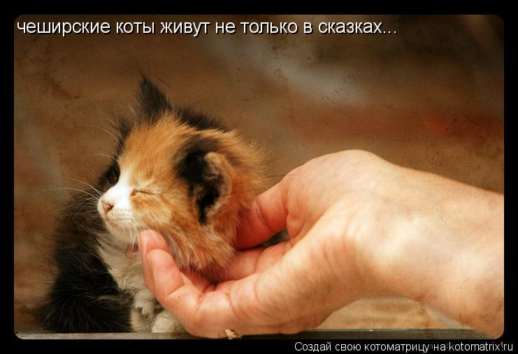 Котоматрица: чеширские коты живут не только в сказках...