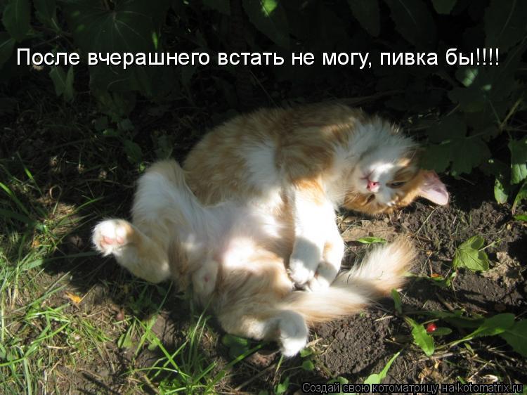 Котоматрица: После вчерашнего встать не могу, пивка бы!!!!