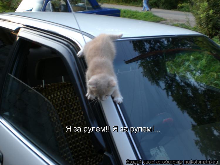 Котоматрица: Я за рулем!! Я за рулем!...