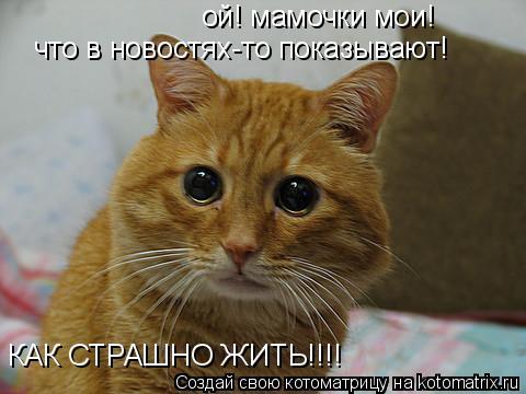 Котоматрица: ой! мамочки мои!  что в новостях-то показывают! КАК СТРАШНО ЖИТЬ!!!!