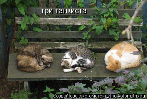 Котоматрица: три танкиста