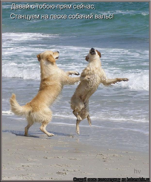 Котоматрица: Давай с тобою прям сейчас, Cтанцуем на песке собачий вальс!