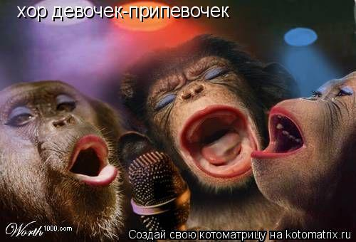 Котоматрица: хор девочек-припевочек