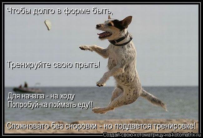 Котоматрица: Чтобы долго в форме быть, Тренируйте свою прыть! Для начала - на ходу Попробуй-ка поймать еду!! Сложновато без сноровки - но поддается трениро