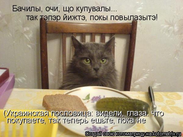 Котоматрица: Бачилы, очи, що купувалы... так тэпэр йижтэ, покы повылазытэ! (Украинская пословица: видели, глаза. что покупаете, так теперь ешьте, пока не пов