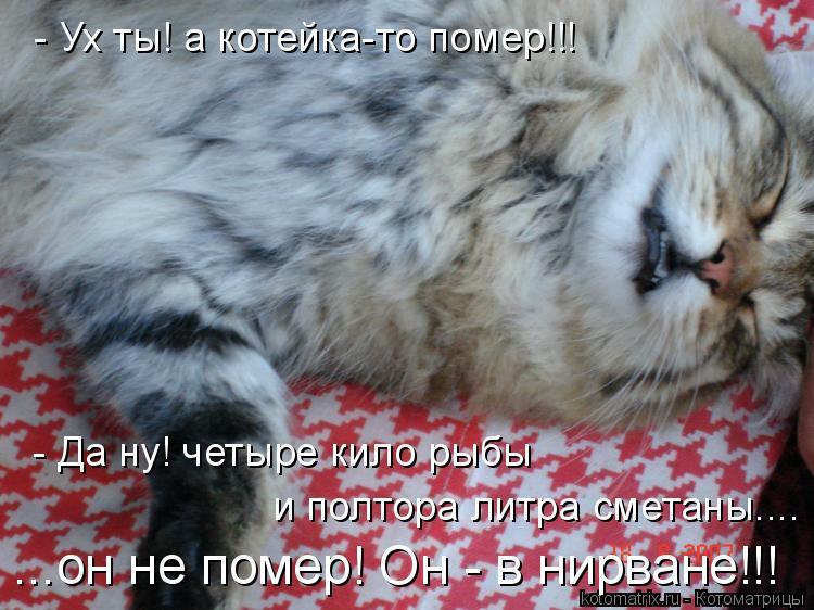 Котоматрица: - Ух ты! а котейка-то помер!!! - Да ну! четыре кило рыбы  и полтора литра сметаны.... ...он не помер! Он - в нирване!!!