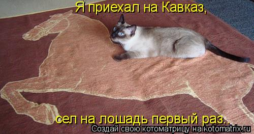 Котоматрица: Я приехал на Кавказ, сел на лошадь первый раз..